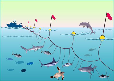 Thunfisch-Tornado – Fische im Hormonrausch – Meertext